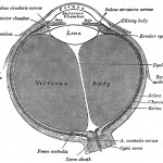 Eye illustration from Gray's Anatomy.