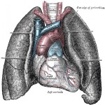 Heart and lung illustration from Gray's Anatomy.